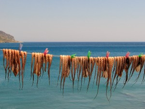 Octopus_drying_under_the_sun_in_Greece